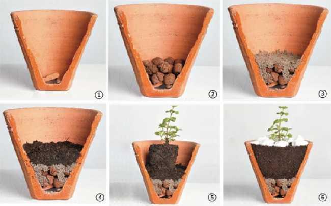 Modo-de-plantar-em-vasos.